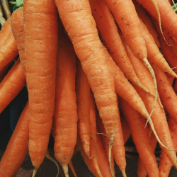 carrots Best Things To Juice For Weight Loss